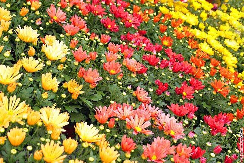Цветы: potashnikov.com/gallary/v/flowers/flowers-2.jpg.html